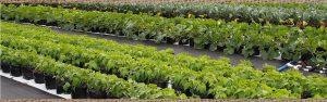 Farm Share CSA West Palm Beach 1