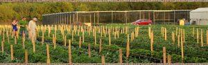 Swank Farms Blog Articles 1